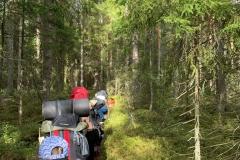 2020-Skogsfaglarna-1
